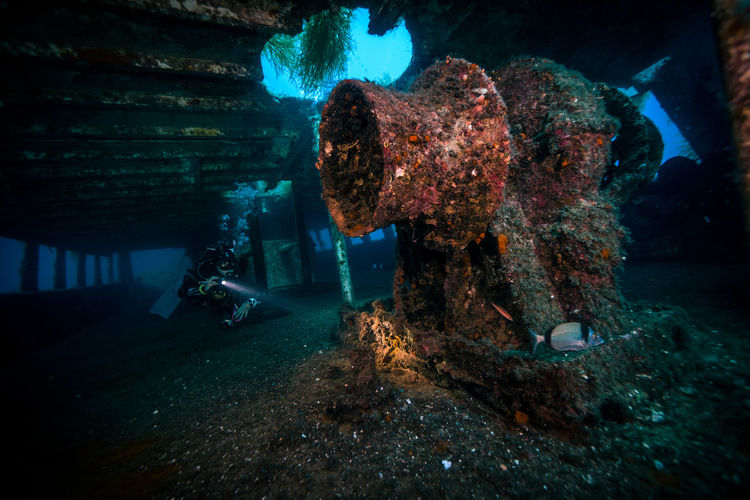 View of shipwreck underwater