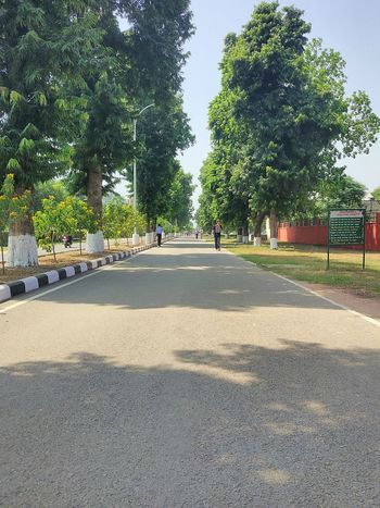 Tree Day Road Outdoors Shadow No People Nature Sky Thaparuniversity_patiala