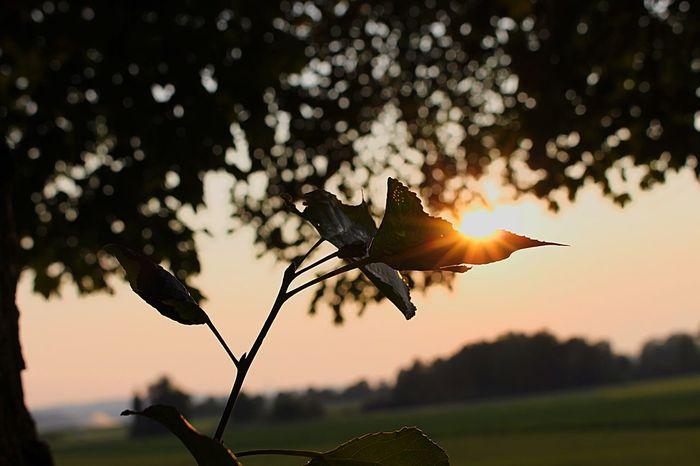 Enjoying The Sun Canon EOS 700D Nature Nature Photography Naturelovers Taking Photos Enjoying Life