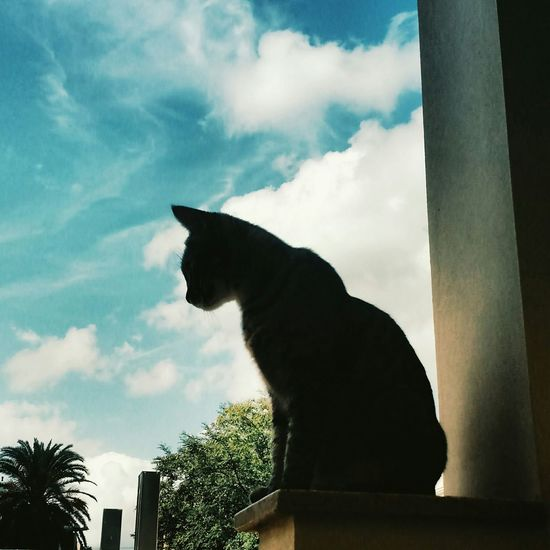 First Eyeem Photo Cat Cat Lovers Shadow Meggs