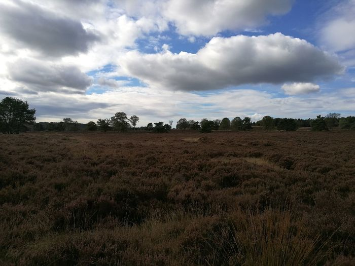 Beautiful landscape during a Sunday afternoon run. Landscape Runnersworld Sky Cloudy Veluwe Eerbeek Holland Hollands Landschap Hollandse Luchten