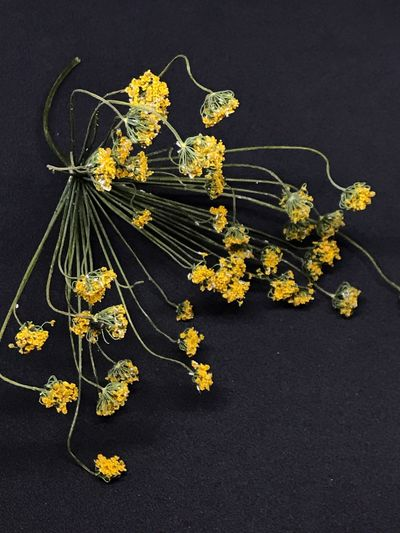 Yellow Flower Studio Shot No People Fragility Indoors  Close-up Flower Head Nature Freshness Food Day Dry Dill Dill