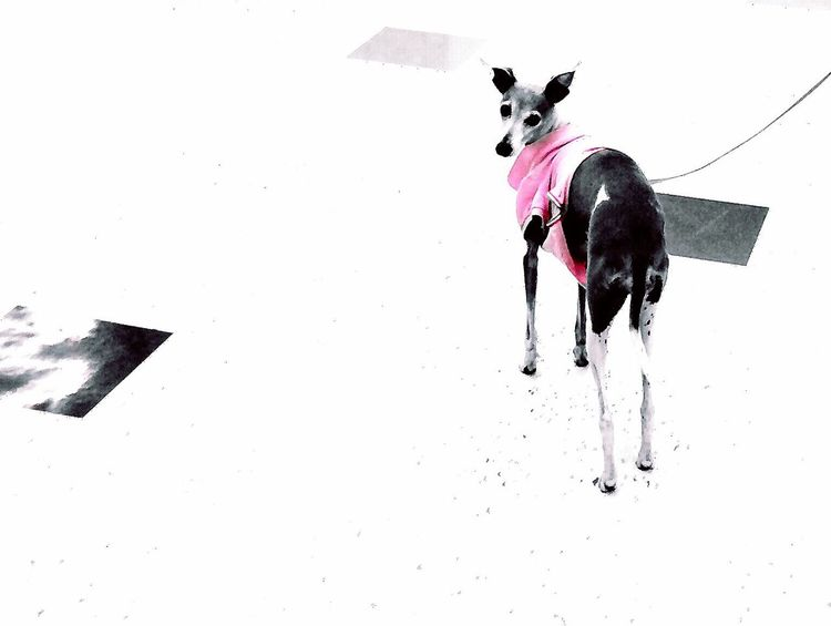 Minimalism Dog Pretty In Pink