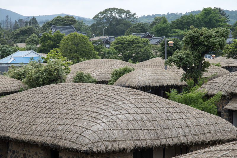 landscape of Seongeup Folk Village in Jeju Island, South Korea JEJU ISLAND  Seongeup Folk Village Architecture Day Nature No People Outdoors Roof Thatched Roof Tree