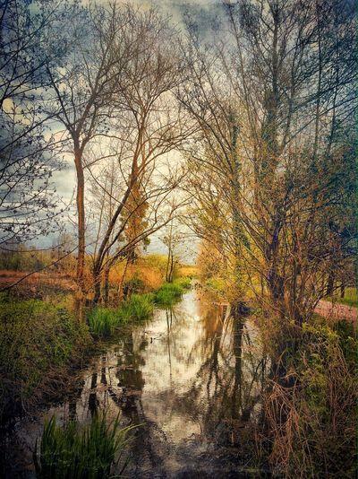 NEM Painterly IPhoneography EyeEm Best Shots NEM Submissions