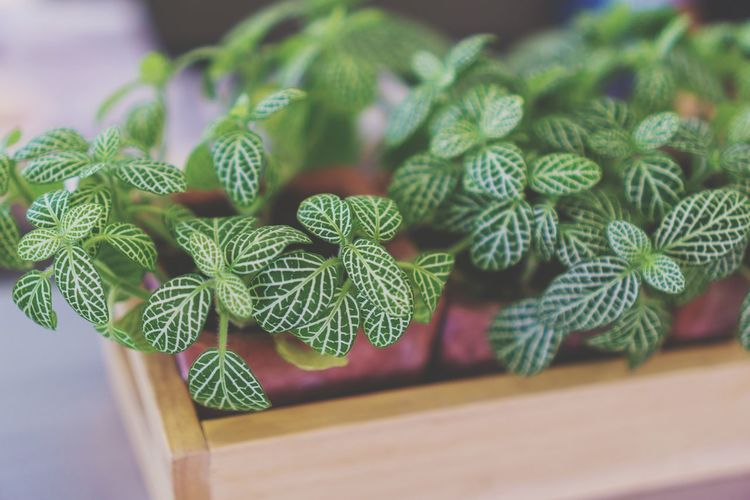 Plant Green Color Indoors  Table No People Leaf Close-up Nature Food Day Freshness Trees And Nature Herb Beauty In Nature Nature Nature Beauty In Nature