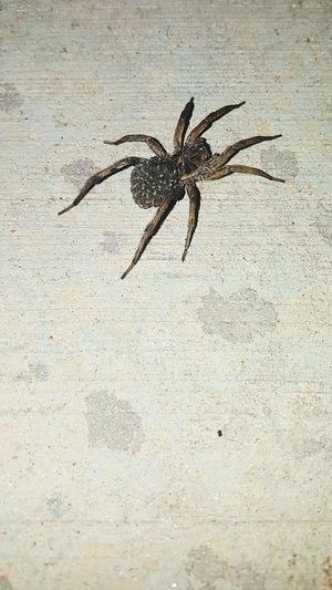 Ewww Spider