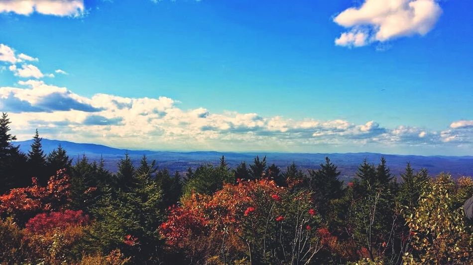 The white mountains. Forest Scenics Beauty In Nature Freshness No People Outdoors Green Color Sky Blue Trees And Sky Tree_collection  Treetop Tree Treescape Treetastic Sky And Clouds Skyscape Mountains And Clouds Mountains
