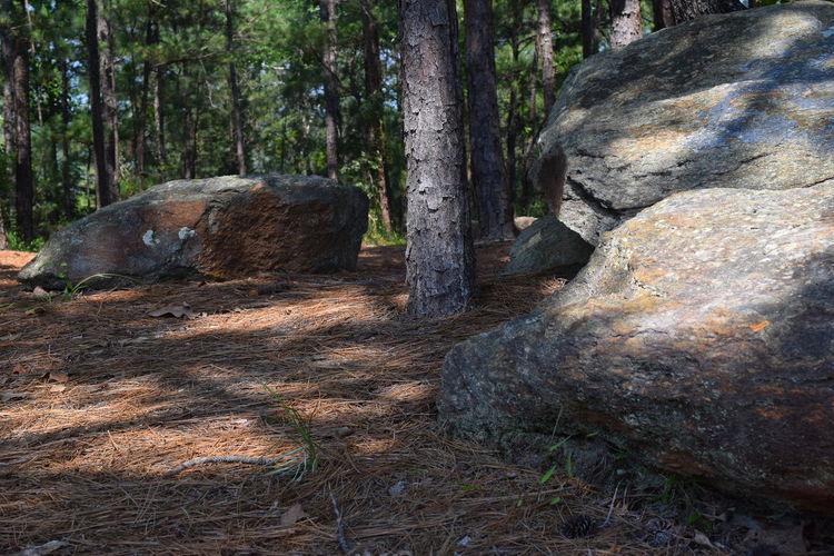 Lake Martin Overlook Park... Alabama Alabama Parks Forest Landscape Nature Outdoors Park Park - Man Made Space Rock - Object Tranquility Tree Trunk WoodLand Cherokee Ridge Cherokee Ridge Hiking Park Cherokee Ridge Overlook Lake Martin✌ Lake Martin Alabama Outdoors Hiking Adventures