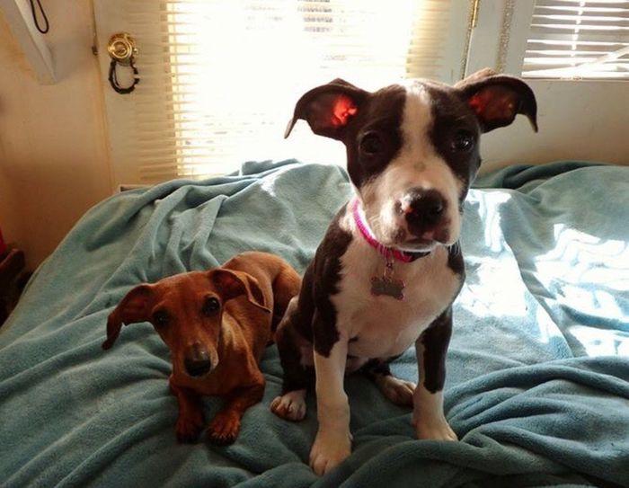 Buds Dogdays Macy CanineCuteness Friends Braiagasm XD