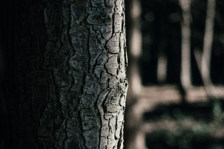 und der Wald steht schwarz... Bark Brown Close-up Focus On Foreground Forest From My Point Of View Growth Nature No People Plant Bark Rough Textured  Toughness Tree Tree Tree Trunk