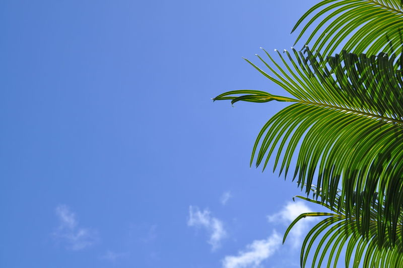 Low Angle View Of Palm Leaves Against Sky