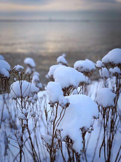 White bird on frozen plants during winter