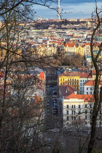 Prague skyline Architecture Building Exterior Built Structure City Building Tree Nature Cityscape High Angle View