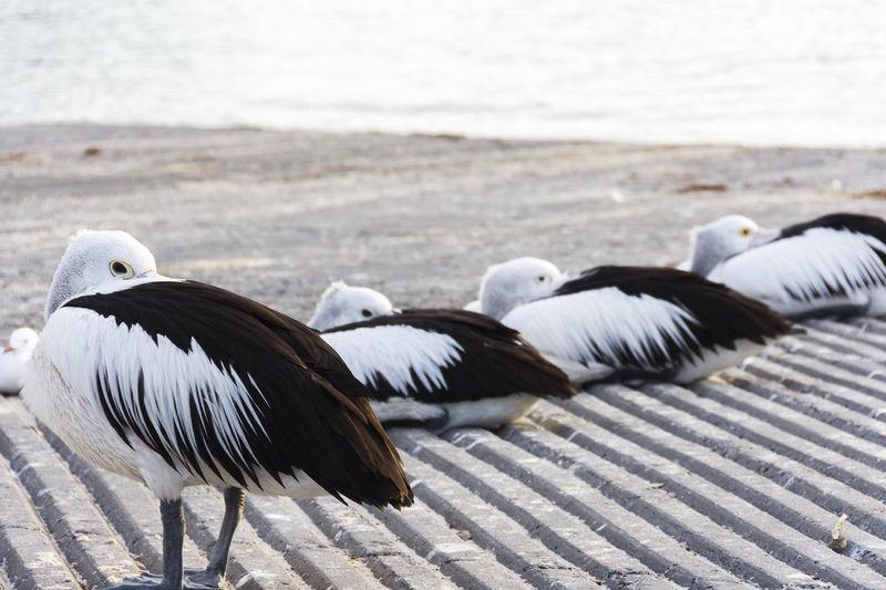 Birds perching on shore at beach