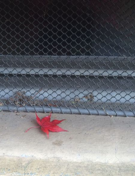 Autumn Red Leaf Grill Outdoors Day No People
