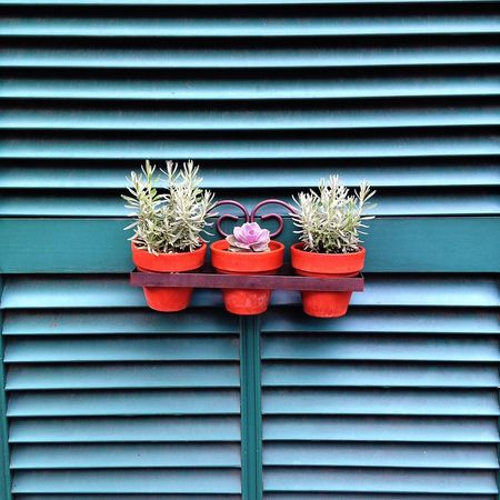 Front door decoration Flower No People Plant Front Door Shutter Green Decoration Unique Different Simple Beauty New England  Fun Pattern, Texture, Shape And Form Straight Lines Old House Snapping Pics Symmetry