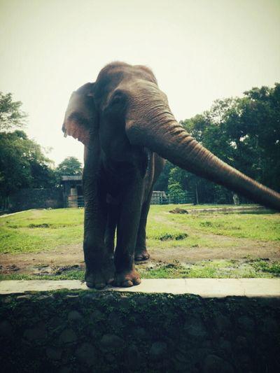 Sweet Elephant First Eyeem Photo