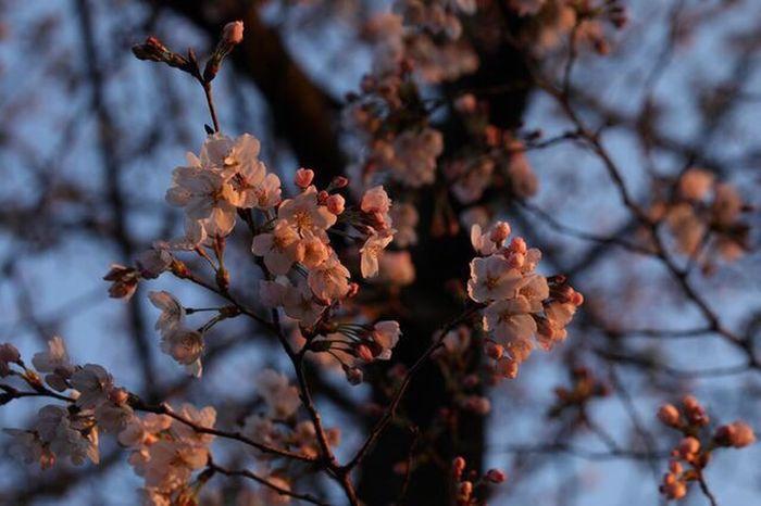 Nature Flower Head