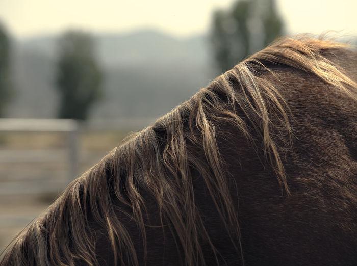 Close-up of horse mane