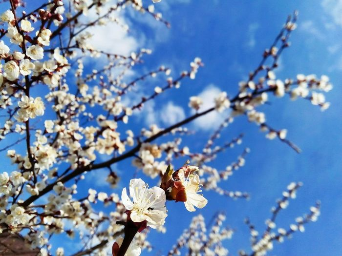 Wonderful day... Flower Tree No People Blue Sky Flower Head Nature Beauty In Nature Springtime Outdoors Day