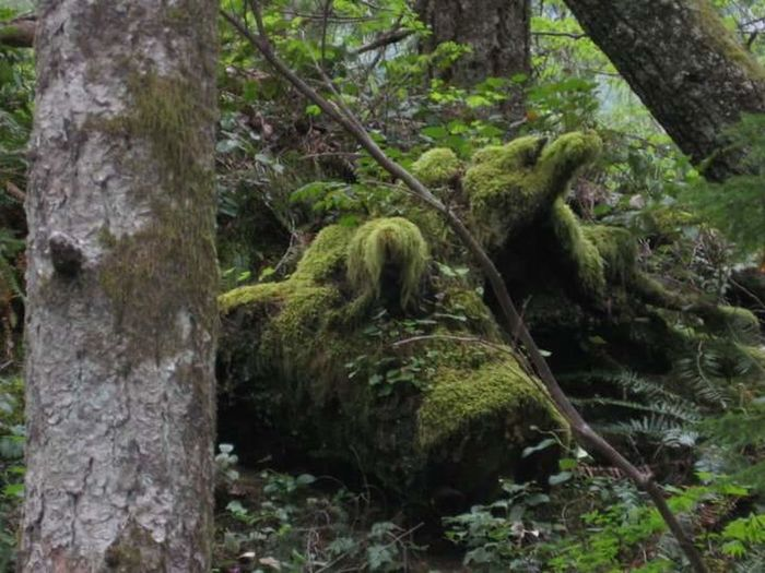 Nature Camping I See Animals Moss And Trees
