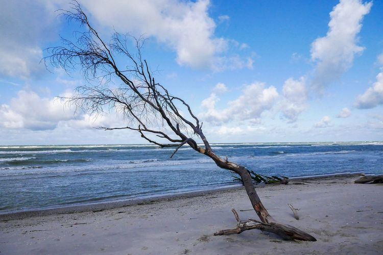 Sky Cloud - Sky Sea Horizon Over Water Water Horizon Tranquility Beach Beauty In Nature Tranquil Scene Tree Nature Scenics - Nature No People Outdoors Plant Driftwood Land Non-urban Scene Day