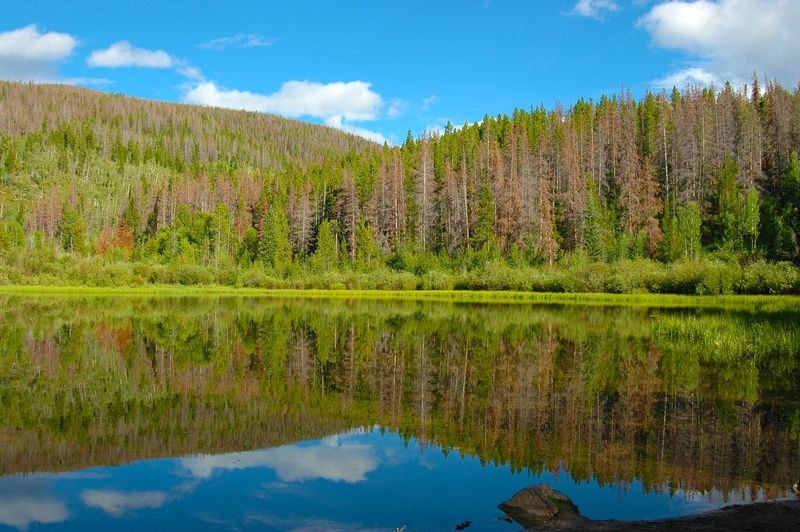 A serene lake hidden in Colorado. Forest Lake Relfection Serenity