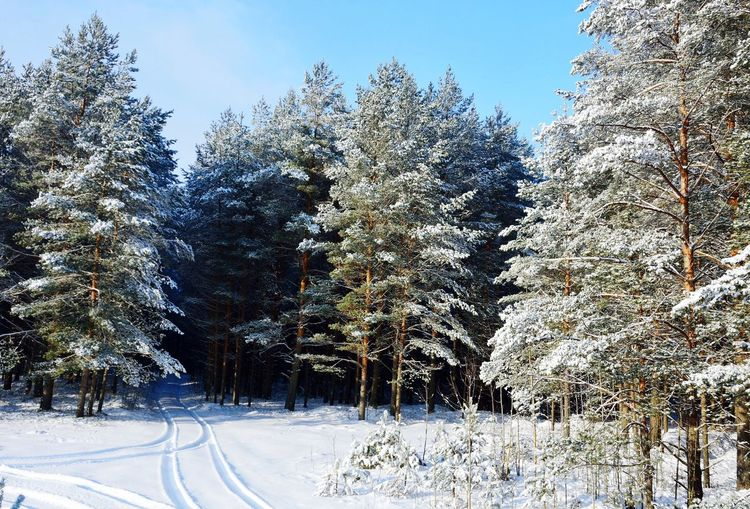 Snow Winter Nature Cold Temperature Tree Outdoors Day Clear Sky Beauty In Nature No People Sky