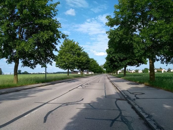 Empty road along trees and plants in village