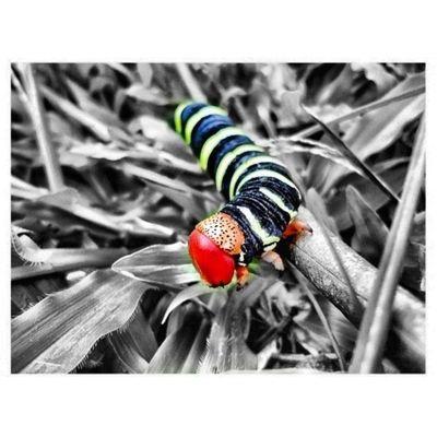 Nature Bugs Caterpillar Colorporn Colourbound