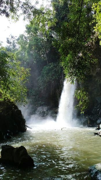 Virgin Waterfall Rivers Rocks And Water Bamboo Trees Natural Photography natural