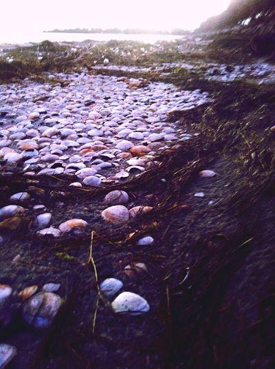 Nature On Your Doorstep Peel Region Sea Shells 🐚 Estuary Mandurah Fresh Air Waterside Southwest