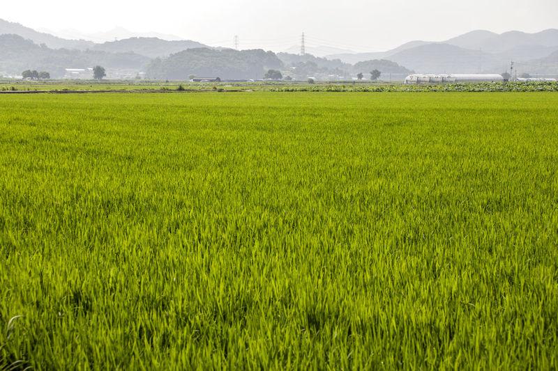 Scenic view of grassy field
