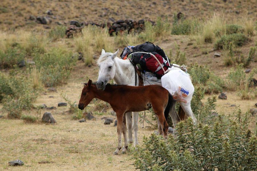 Mt.Ararat Turkey Dogubayazit Animal Themes Domestic Animals Mammal Nature No People Outdoors Portrait