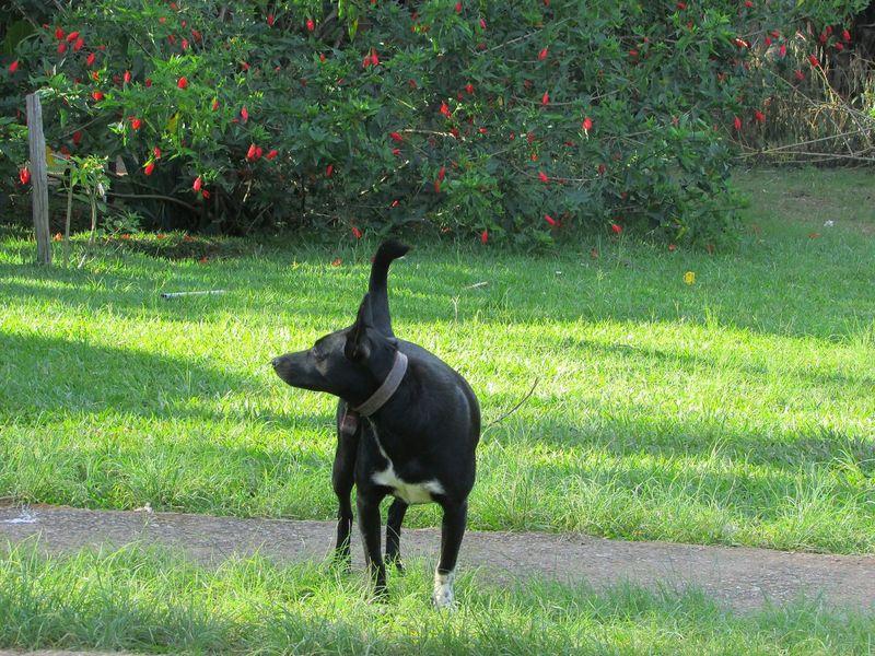 Domestic Animals Day Nature Dog