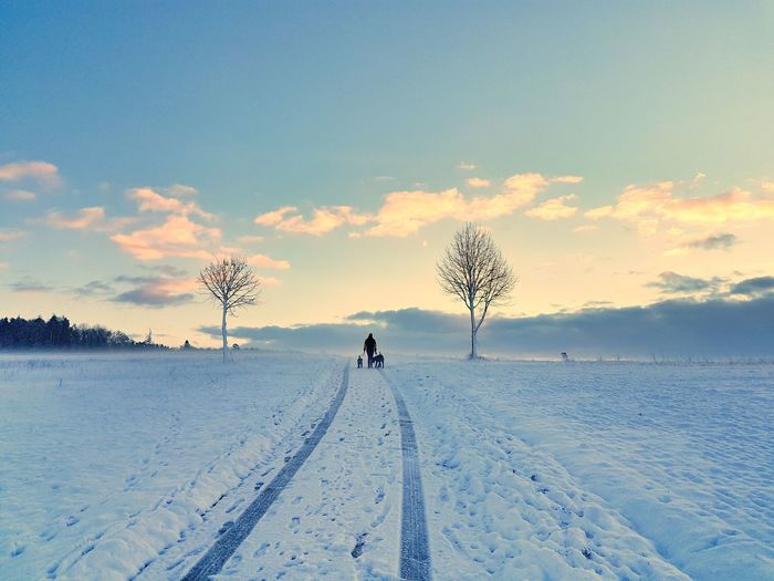 Winter morning Morning Sunrise Tree Snow Cold Temperature Winter Full Length Sunset Dog Silhouette Sky Landscape Tire Track
