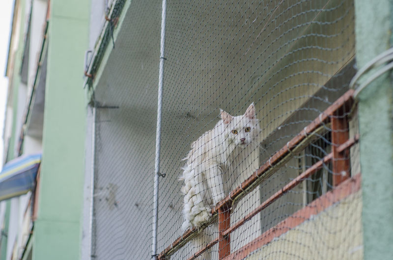 View of cat in cage