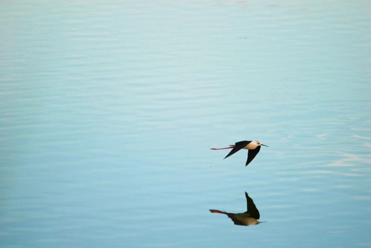 Minimalist photography of bird into the wild 📸 taken last week with 400mm lens Mypointofview Minimalism EyeEm Nature Lover EyeEmNewHere Nofilter Life In Motion 400mm Wildlife & Nature Wildlife Photography Echasse Blanche Reflections In The Water Animals In The Wild Animal Themes Bird Water Nature Day Spread Wings Animal Wildlife Motion Flying Beauty In Nature Outdoors
