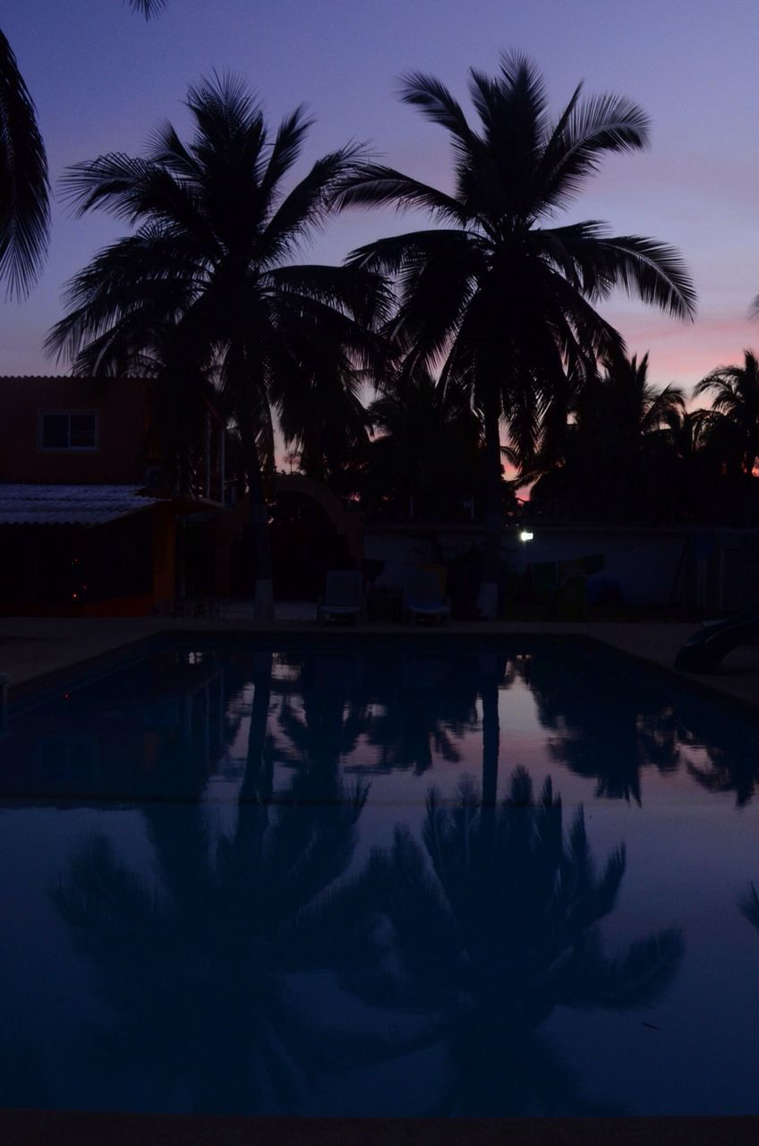 palm tree, tree, silhouette, reflection, swimming pool, water, sunset, nature, no people, sky, outdoors, night, beauty in nature