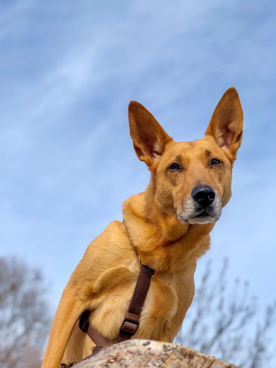 Portrait of dog looking away against sky