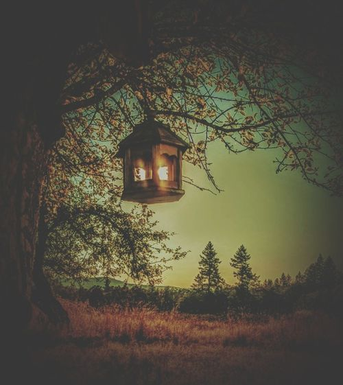 Tree Tranquility No People Beauty In Nature Day Outdoors Sky The Week On EyeEm Backgrounds Grass Field Sun Dramatic Sky Beautiful Rural Scene Lost In The Landscape PNW Sunsets! Beauty In Nature Tree Apple Tree Bird Feeder Sunlight Through The Window Sunlight Obscured Light Effect Light Beam