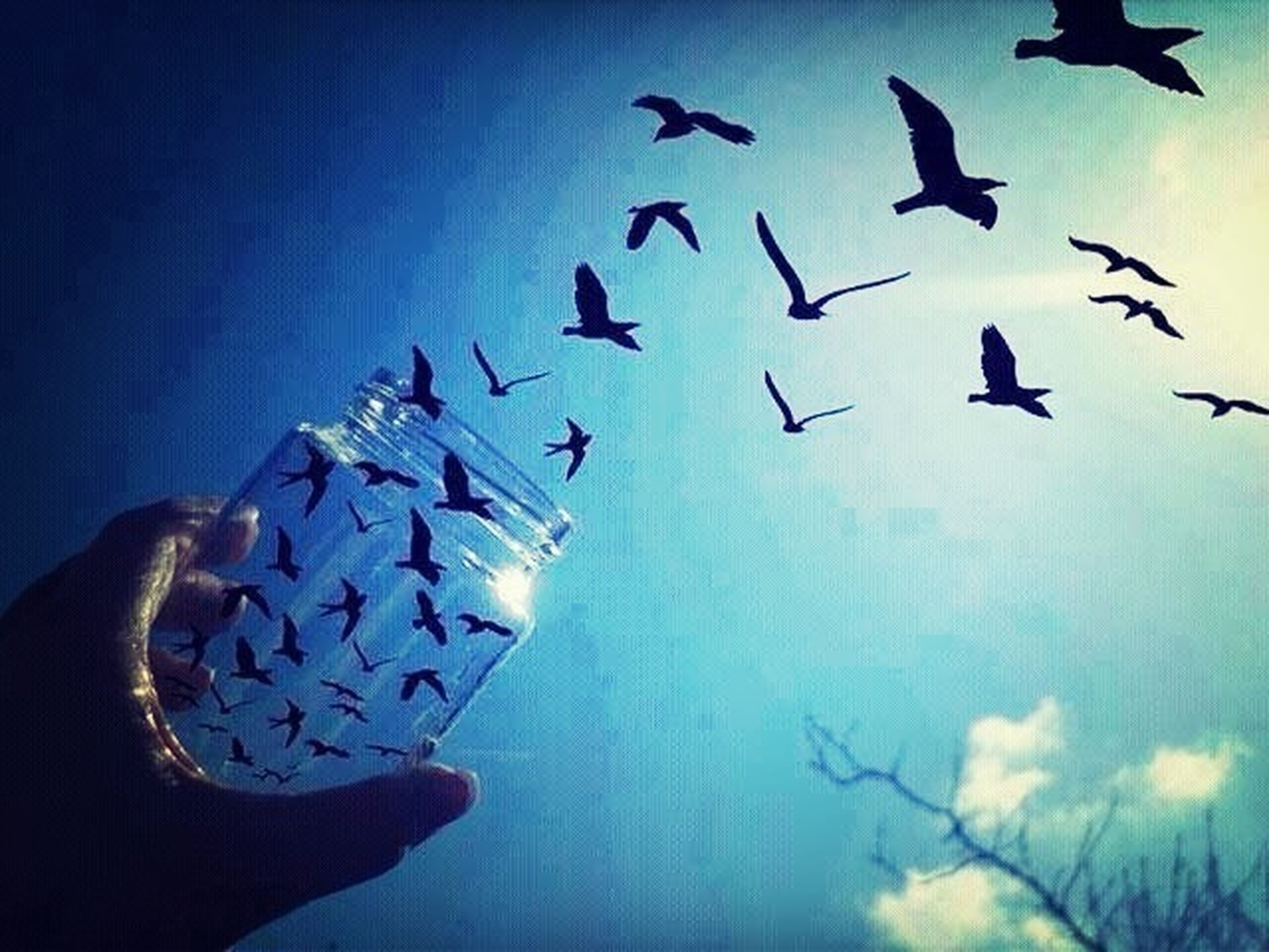 flying, bird, animals in the wild, animal themes, flock of birds, low angle view, wildlife, blue, sky, mid-air, spread wings, silhouette, clear sky, outdoors, built structure, day, togetherness, medium group of animals