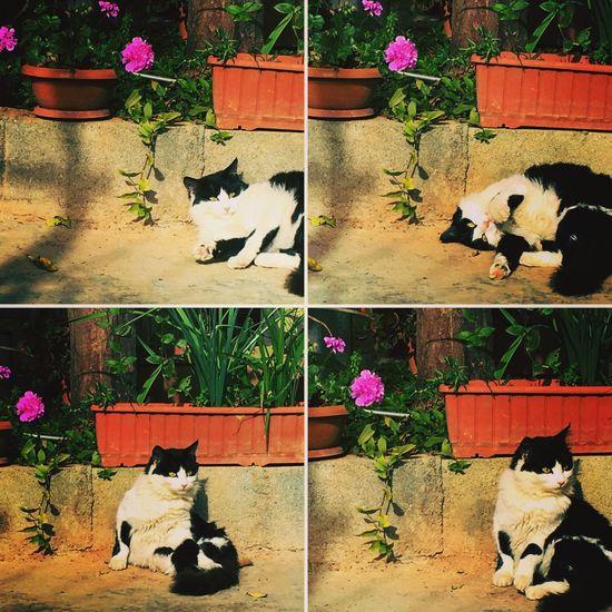 #cat ❤️ Domestic Cat Pets Domestic Animals Animal Themes Cat Mammal Feline
