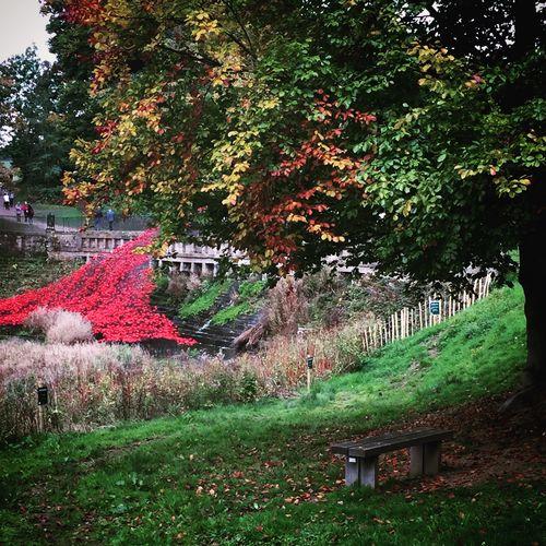 We will remember them Poppies  Remembrance Rememberancesunday Scuplture Yorkshire Sculpturepark Art Autumn Countryside