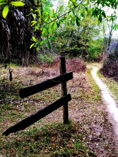 And yet another trail... Tree Trail Walking Around Hiking Nature_collection Fence