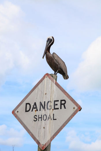 Low angle view of seagull perching on a sign