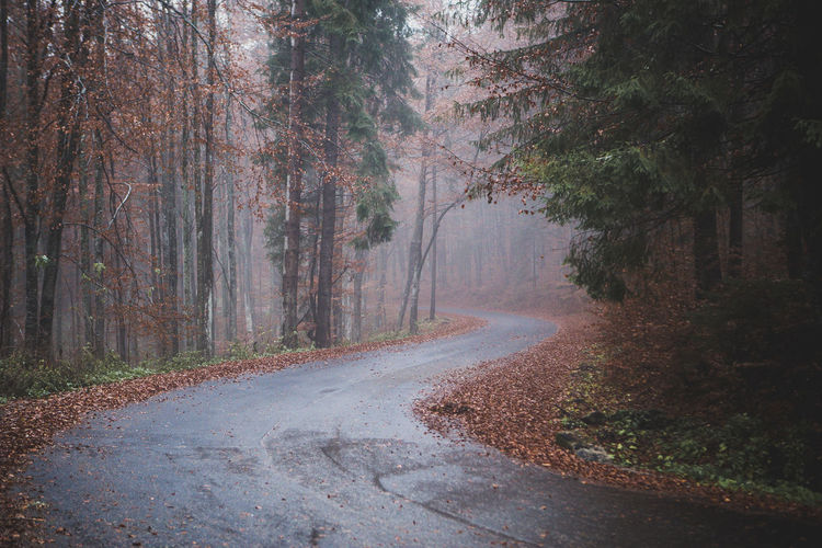 Autumn Beauty In Nature Day Fog Forest Landscape Leaf Morning Nature Nature Nature Photography Nature_collection No People Outdoors Raining Day Rainy Days Road Road Roadtrip Scenics Shadow The Way Forward Tranquility Tree WoodLand
