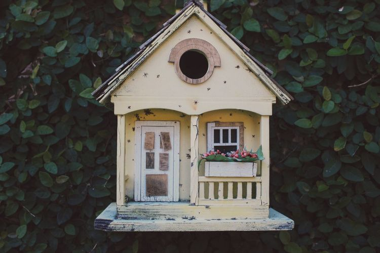 Bird House Close-up Day House Nature No People Plant Small Yellow