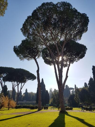 Caracalla Italy Roma Shadows Shadows & Lights Sun Thermos Trees
